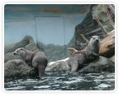 Zoo Ohrada